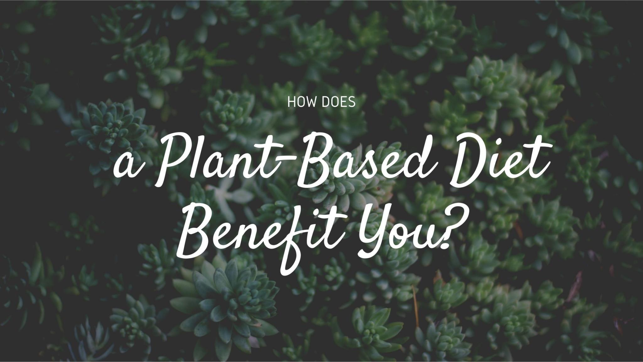 How Does a Plant Based Diet Benefit You?